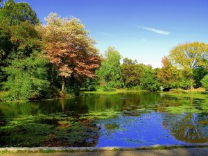 Reasons to move to Brooklyn - Prospect Park