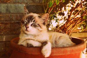 A cat sleeping in a pot.