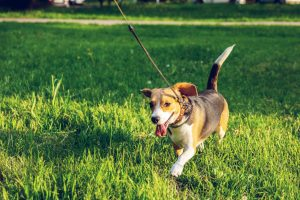 Most pet-friendly neighborhoods in Brooklyn is what you and your dog need