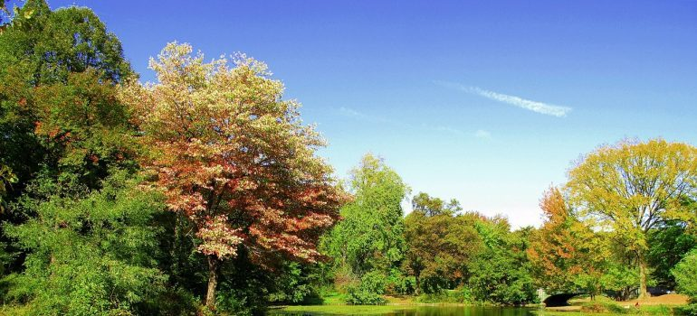 A view onto a pond in Prospect Park in Brooklyn
